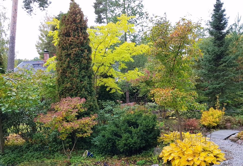 Puut, pensaat ja maanpeiteperennat